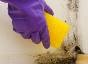 Don't paint over mold without proper preparation